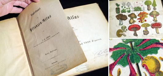 Old Plants-Atlas Book German 1875