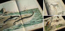 Sehr seltenes Naturkunde-Buch mit vielen lithographierten Farbtafeln 1900