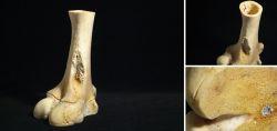 Knochen als Kerzenständer
